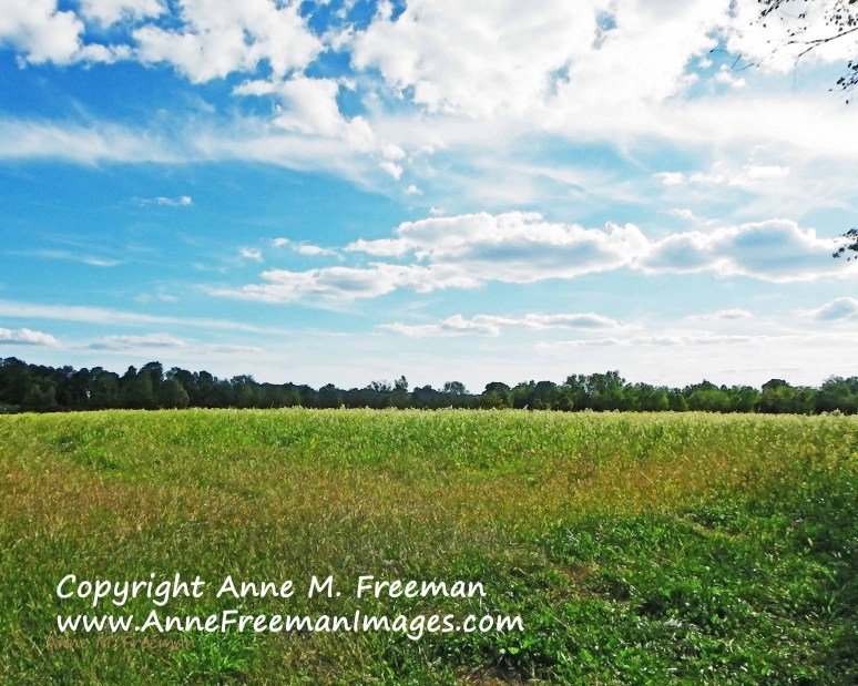 Grassy Summer Field-Copyright Anne M. Freeman