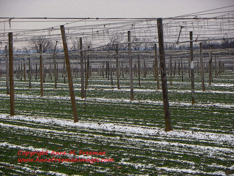 """Shade Tobacco Field in Snow"" - Copyright Anne M. Freeman"