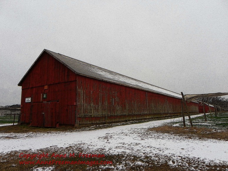 """Tobacco Barn No 1"" Copyright Anne M. Freeman"