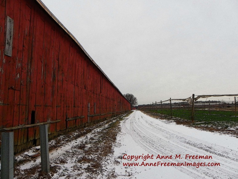 """Tobacco Barns In Winter"" - Copyright Anne M. Freeman"
